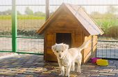 Beautiful white pooch dog near the booth on a sunny day. House for an animal. Selective focus poster