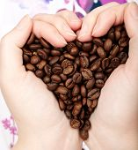 Heart of cofee grains in hands. Natural morning light. poster