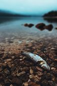 Dead fish on the lakeshore in misty morning, selective focus with shallow depth of field poster