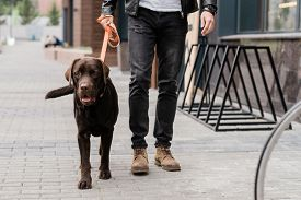 Cute brown purebred dog and his owner moving down street of the city while chiiling together in the morning