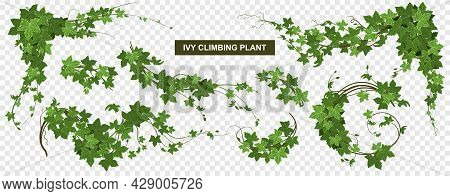 Ivy Climbing Plant Transparent Set With World Map And Ripe Leaves With Background And Editable Text