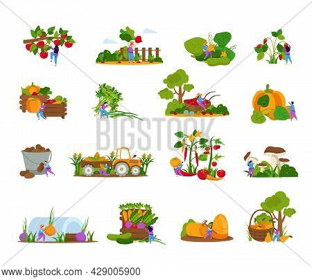Harvesting Collection Of Flat Icons And Isolated Images Of Plants People And Gathering Appliances Wi