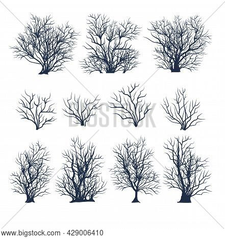 Set Of Bare Trees. Beautiful. Crown With Branches. Bushes Close-up. Flat Cartoon Style. Winter Seaso