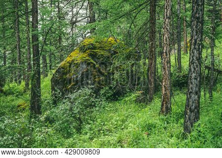Scenic Forest Landscape With Big Mossy Stone With Green Grasses Among Thickets And Trees. Vivid Scen