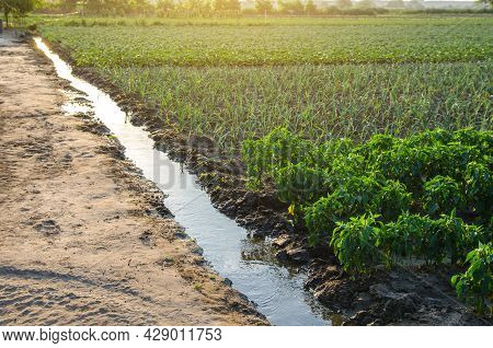 Irrigation Canal With Water On A Farm Plantation. Surface Irrigations Of Crops. European Organic Far
