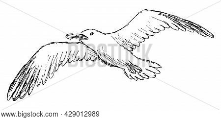 Rough Grunge Sketch Of A Flying Seagull. Simple Freehand Pencil Outline Drawing Of A Bird With Outst