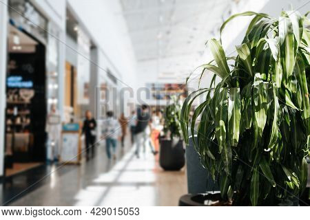Defocused Abstract Background Of Shopping Mall With Shoppers, Selective Focus On A Large Green Plant