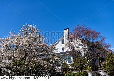 Dwelling With Trees. Residential Building Outside The City. Country House Or Vacation Home.