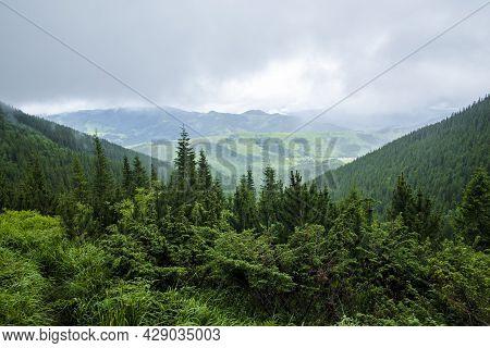 Mountain Landscape. Mountain Range. Green Grass, Blue Mountains, Flowers And Needles. Montenegrin Ri