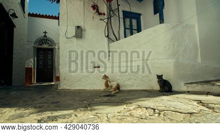 Street cats on the streets of the island of Hydra, Greece.