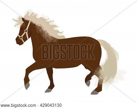 Mini Horse Or Pony In Vector Isolated On White Background