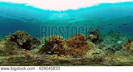 Coral Reef And Fishes Underwater. Underwater Fish Reef Marine. Tropical Colorful Underwater Seascape