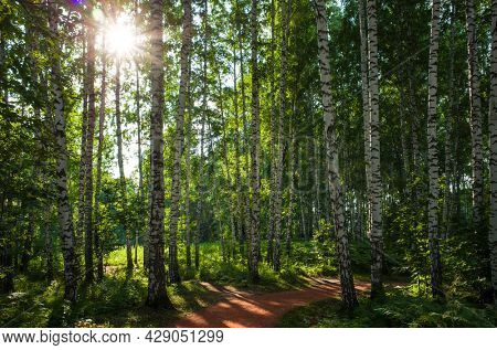 Sun light in green birch tree forest with hiking path in Siberia, Pure nature, ecology, environmental conservation, eco tourism, nature background, in Science city Koltsovo, Novosibirsk, Russia