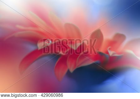 Beautiful Macro Shot of Magic Flowers.Border Art Design.Magic Light.Extreme Close up Photography.Conceptual Abstract Image.Blue and Orange Background.Fantasy Art.Creative Wallpaper.Beautiful Nature Background.Amazing Spring Flower.Water Drop.Copy Space.