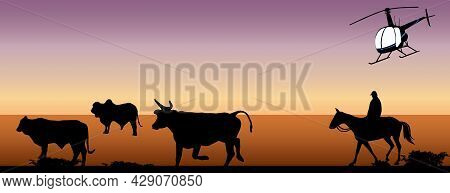 Droving Or Mustering In The Australian Outback