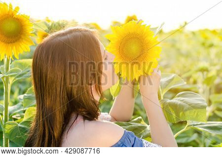 Beautiful Young Woman Sniffing A Sunflower In The Field. Young Woman In Sunflowers Field In Sunbeams