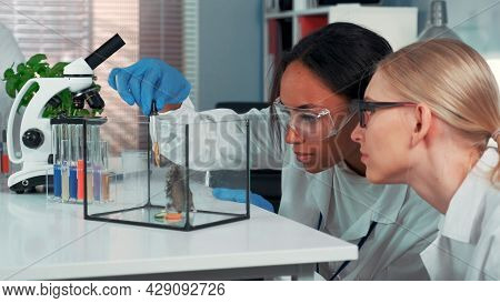 Two Multiracial Female Scientists Showing Amazement During Providing Experiment With Lab Hamster. Bl
