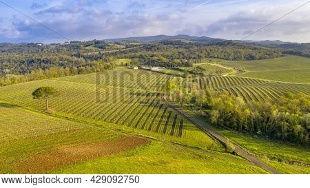 Aerial View Of Tuscan Vineyards With  Rows Of Grapes Hon A Clear Morning In Spring In The Hills Near