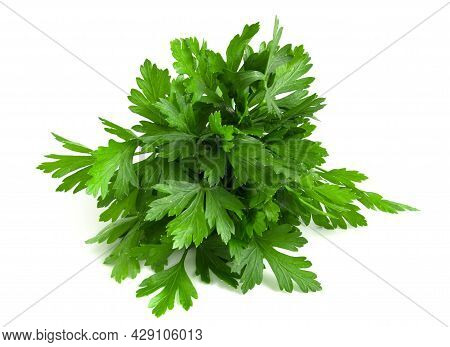 Fresh Green Parsley Collected In A Bunch Isolated On White Background