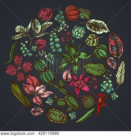 Round Floral Design On Dark Background With Ficus, Iresine, Kalanchoe, Calathea, Guzmania, Cactus St