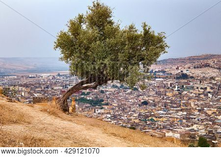 View Of The Fez El Bali Medina. Is The Oldest Walled Part Of Fez, Morocco. Fes El Bali Was Founded A