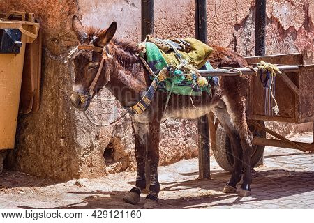View Of The Donkey In The Medina Of Marrakesh On A Sunny Day. Morocco.