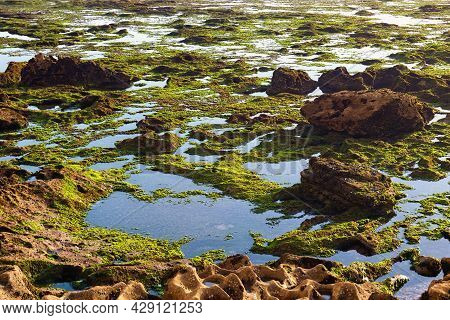 Surface Of The Volcanic Shore Of The Atlantic Ocean In The Area Of Essaouira In Morocco In The Low T