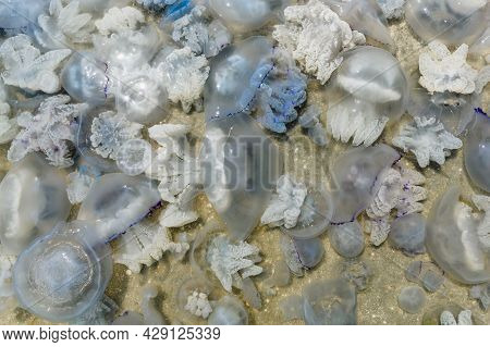 Many Large Jellyfish Near The Coast. A Large Cluster Of Jellyfish In The Sea Of azov In Russia. Se