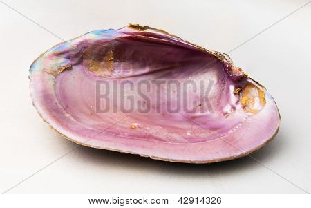 Pink Color Of Abalone (pao Hua Sea Shell)