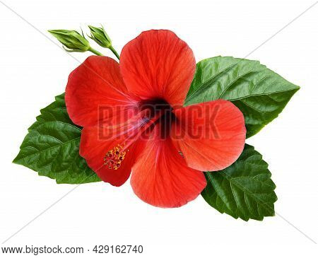Hibiscus Flower In Tropical Arrangement Isolated On White. Top View.