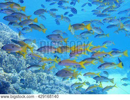 Beautiful Shoal Of Tropical Coral Reef Fish In Full Diversity