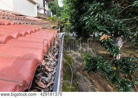 Close-up Of Clogged Roof Rain Gutter Full Of Dry Leaf And Plant Growing In It