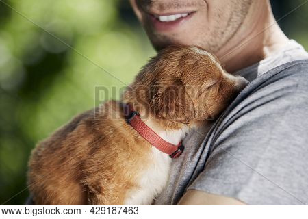 Man Holding Cute Puppy. Nova Scotia Duck Tolling Retriever Sleeping In Arms Of Breeder.
