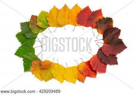 Frame In The Form Of An Oval Of Bright Autumn Leaves On A White Isolated Background. Red-yellow Leav
