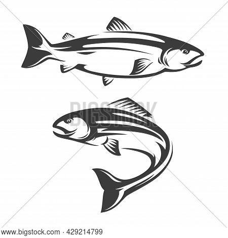 Salmon Fish Icon Of Seafood Or Sea Fishing Sport Vector Design. Atlantic, Coho, Chum Or Chinook, Soc