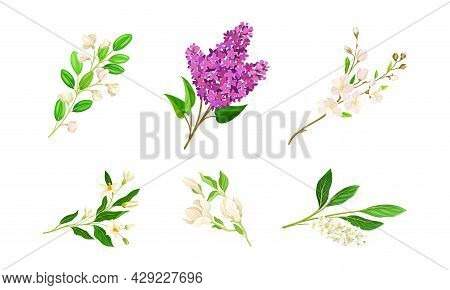 Bloomy Flower Branches With Tender Florets Vector Set