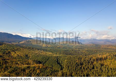 High Mountain Peaks Covered With Autumn Spruce Forest And High Snowy Summits.