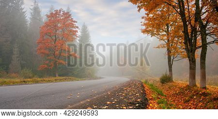 New Asphalt Road Through Forest. Wonderful Autumn Scenery. Low Visibility On The Road In Foggy Weath