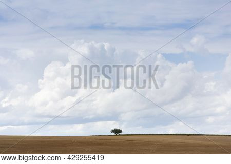 Single Tree In Vast Open Landscape Of Northern France Between Ardennes And Champagne Area Under Larg