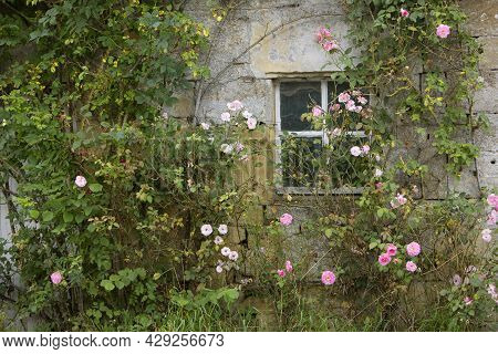 Derelict French Stone Wall Of House With Pink Roses And Window In Ardennes Region Of Northern France