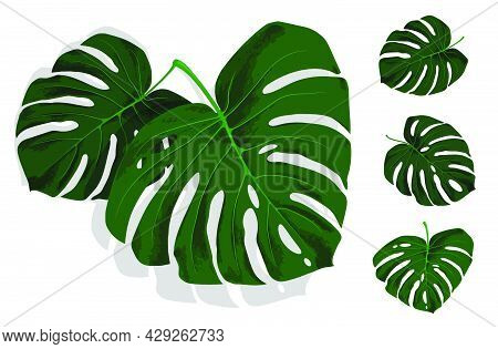 Set Of Green Leaves Of Tropical Plant Monstera. Leaves Of Rainforest Plants. Realistic Vector Isolat