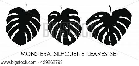 Black Silhouettes Of Tropical Plant Monstera Leaves. Leaves Of Rainforest Plants. Vector Isolated On