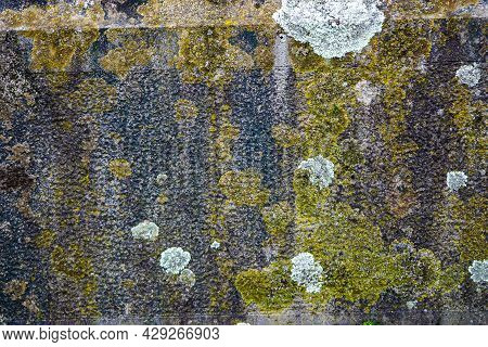 Lichen And Moss Textures And Patterns On A Grungy Old Gravestone