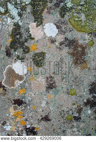 Blotchy Patchy Lichen And Moss Patterns Growing On An Old Textured Stone