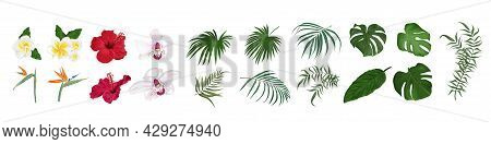 Vector Set Of Tropical Flowers And Leaves. Orchid, Hibiscus, Monstera, Palm Leaves, Bougainvillea, S
