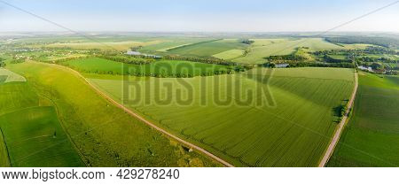 Slightly Hilly Agricultural Fields With Green Unripe Crops, Wheat Field And Country Road On A Foregr