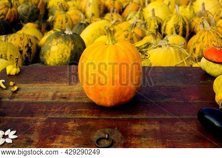 Autumn Frame Composition And Layout Made Of Colorful Pumpkin, Mushrooms, Aged Old Retro Red Backgrou
