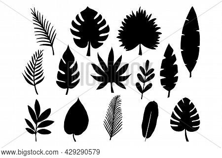 Vector Set Of Tropical Leaves Isolated On White Background. Collection Of Exotic Plants Vector Illus