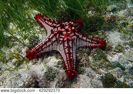 A Starfish On A Sunny Day Underwater