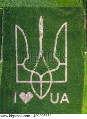 Giant symbol of the country of Ukraine is a trident created by corn sprouts in a corn field. View from above. 05.08.2021, Ukraine, village Velyka Oleksandrivka.
